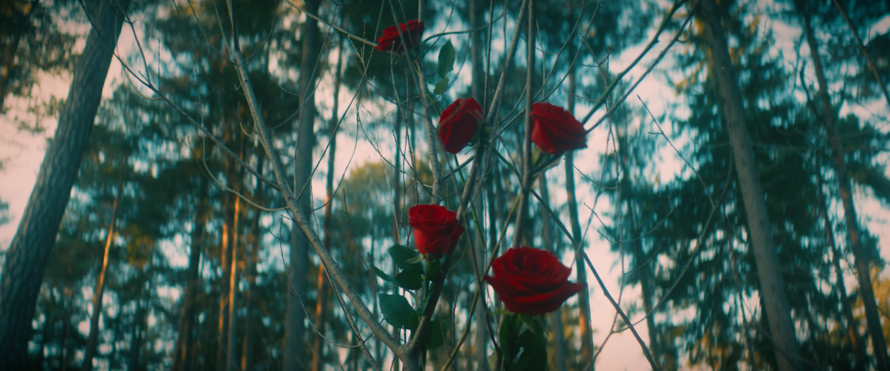 Rosen im Wald Musikvideo zum Lied Rosengarten