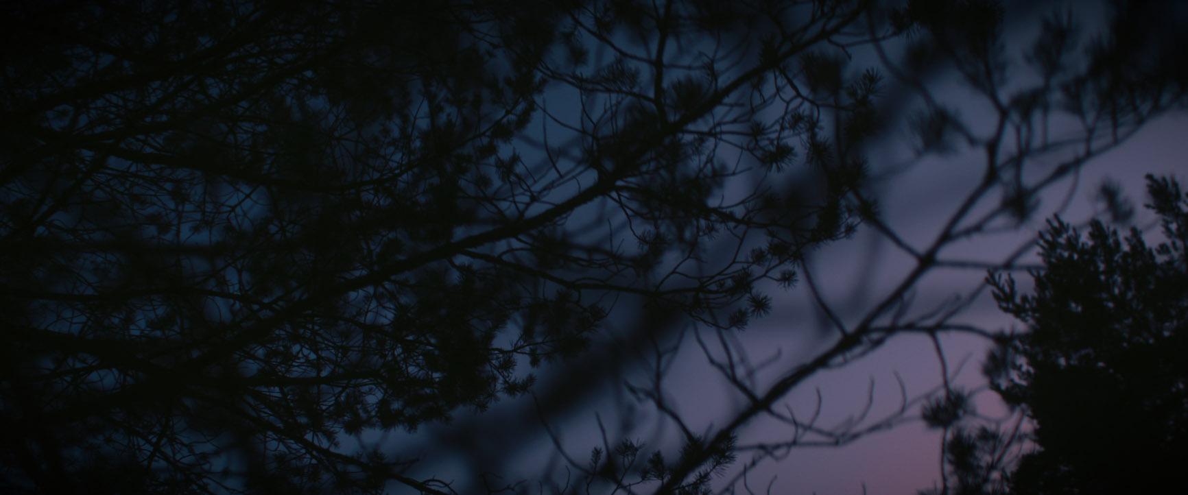 Lila Sonnenuntergang Bäume Musikvideo zum Lied Rosengarten